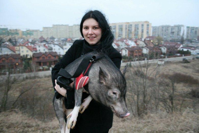 Pani Monika ze swoim pupilem mieszka we Wrocławiu. Dopiero jak warchlak podrośnie, trzeba się uzbrajać w cierpliwość.