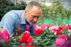 Polscy naukowcy chcą wprowadzić na rynek 30 nowych związków zapachowych