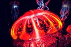 Meduza, jak to meduza: parzy. Czy będzie też leczyć?