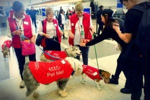 Psy to pełnoetatowi pracownicy lotnisk. Odstresowują podróżnych, pomagają dzieciom. Sprawiają, że ludzie zaczynają ze sobą rozmawiać