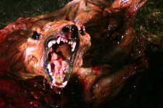 Zwierzę przypomina postać rodem z horroru.