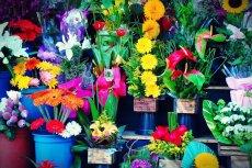 Dzień Matki, walentynki, Dzień Kobiet – kwiaciarze nie mają zbyt wielu okazji do zarobku. Kwiaciarnia to twarda szkoła planowania wydatków i przychodów