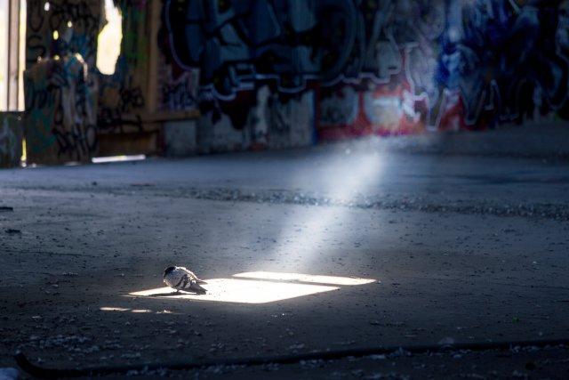 W cieniu pustostanów...