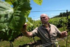 Polska branża winiarska to sport dla pasjonatów.