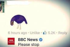 Nawet BBC ma dośćtego pierzastego natręta.