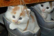 Perfumy o zapachu kota: firma pracowała nad nimi 15 lat!